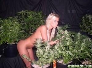 krystal-steal-marijuana-300x224