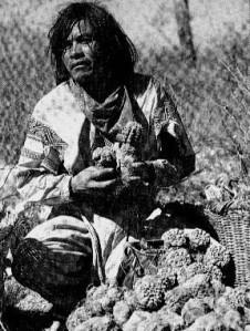 istorie peyote