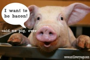 porc, pateu