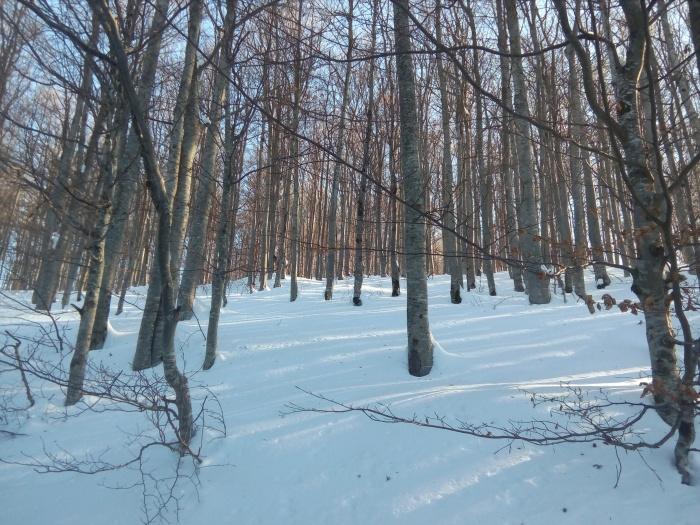 comuna-avram-iancu-iarna-15