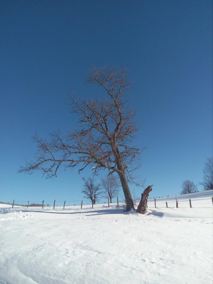 comuna-avram-iancu-iarna-17