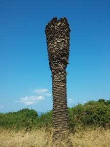 palmier-taiat